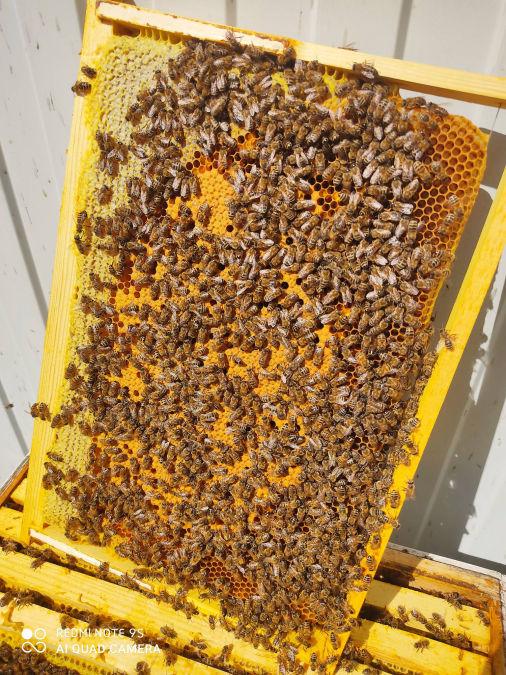 Планшетный пчелопакет